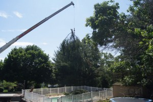 Tree Removal Service - Crane Service