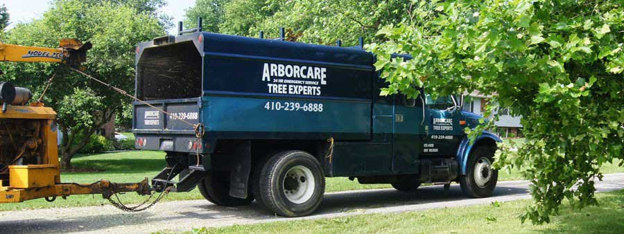 Arbor Care Tree Removal Services