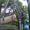 Baltimore Tree Removal