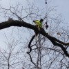 Carroll County Tree Removal