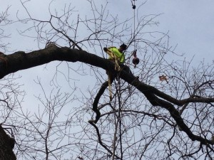 Carroll County Tree Removal