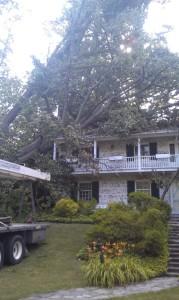 Emergency Tree Removal Eldersburg, MD