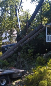 Tree Removal Towson