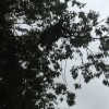 Tree Pruning in Baltimore County