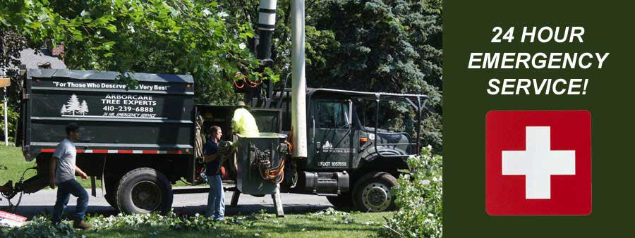 Emergency Tree Removal Service in Baltimore Area