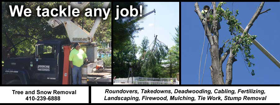 Tree Removal in Baltimore, Maryland