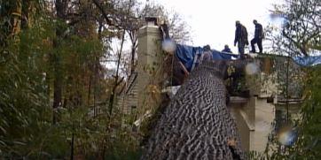Super Storm Sandy – Tree Removal – Bethesda, MD