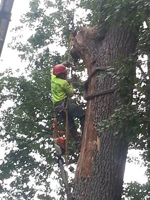 Baltimore Tree Removal  – What You Should Know About Removing a Tree From Your Property