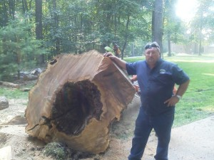 Baltimore Tree Services - Removal Diseased Tree