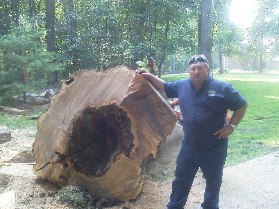 Baltimore Tree Services – Keeping Your Trees Healthy