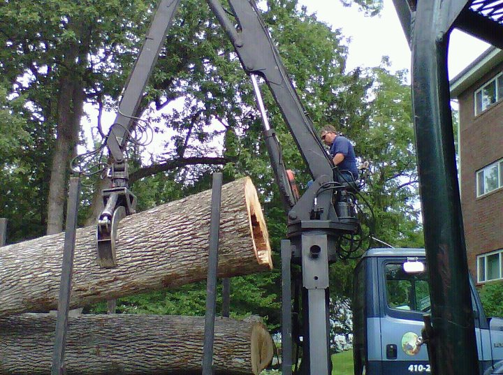 Large Tree Removal – Baltimore Tree Removal Services