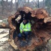 Diseased Tree Removal Carroll County Maryland