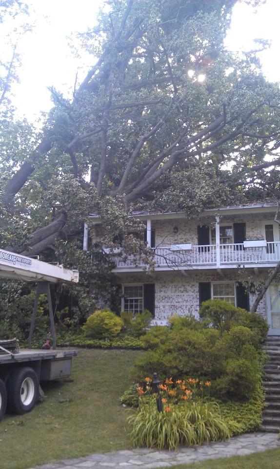 Emergency Tree Removal Post Storm Clean-up in Eldersburg, MD