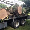 Towson Tree Removal
