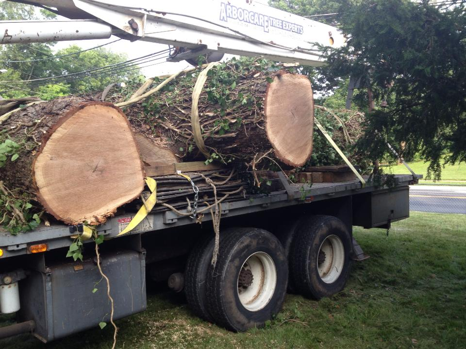 Tree Removal Towson – Certified Arborists Resolve Dangerous Tree Removal
